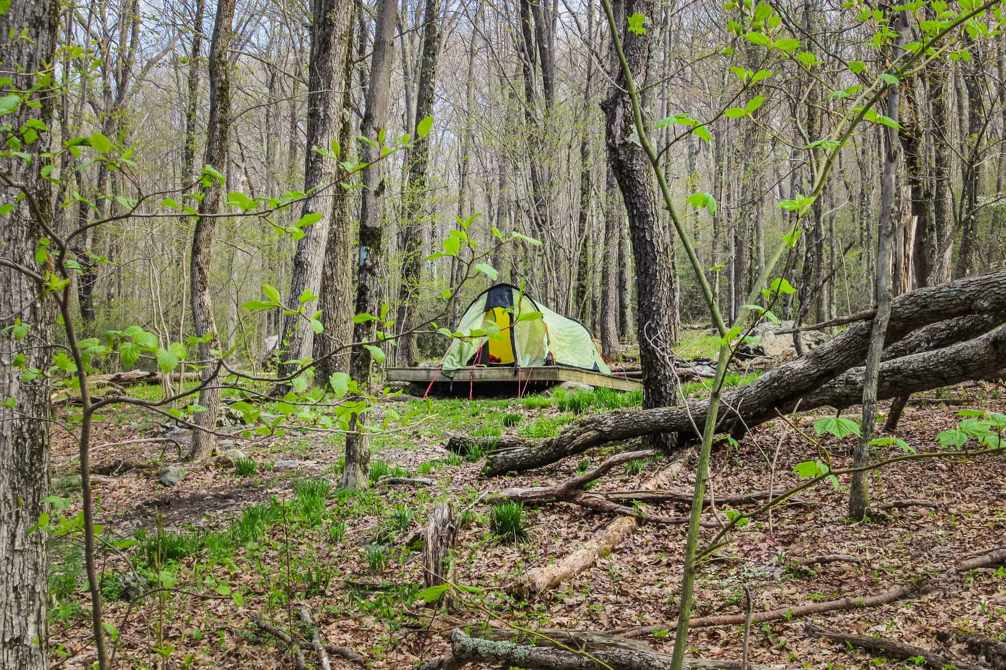 Camping During COVID: What's Open & Where to Go